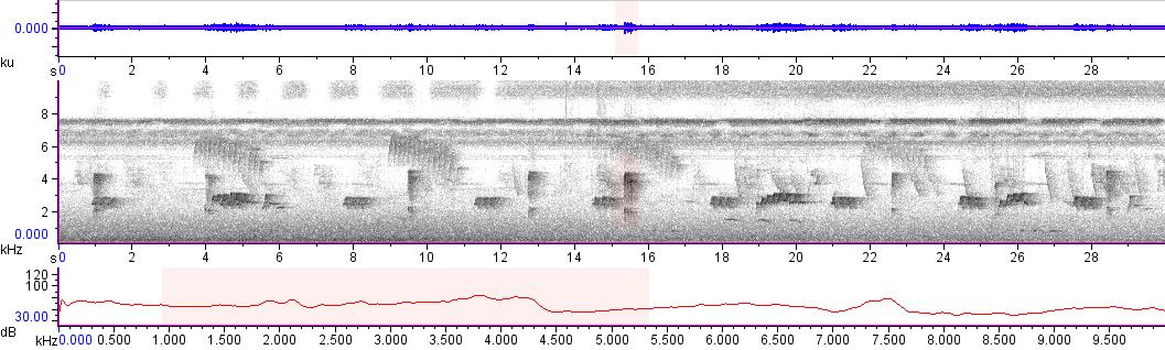 Sonogram of recording #AV 13960