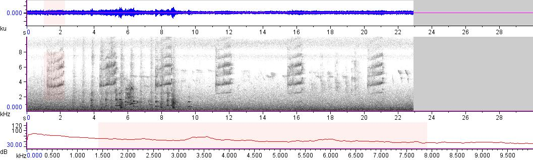 Sonogram of recording #AV 13982
