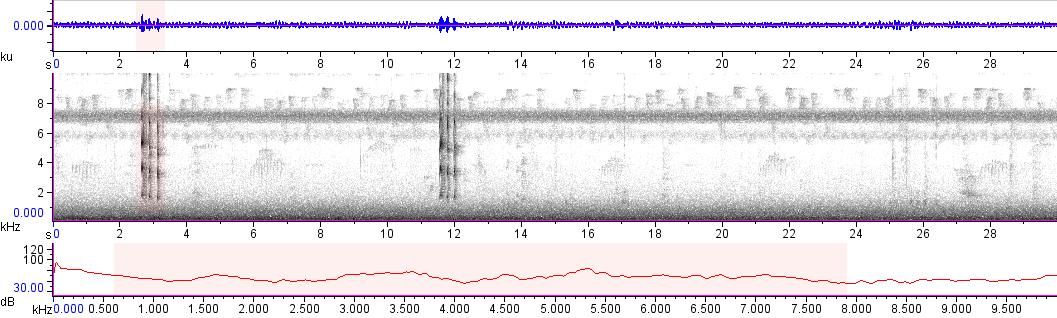 Sonogram of recording #AV 13989