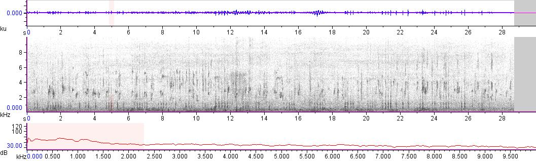 Sonogram of recording #AV 14013