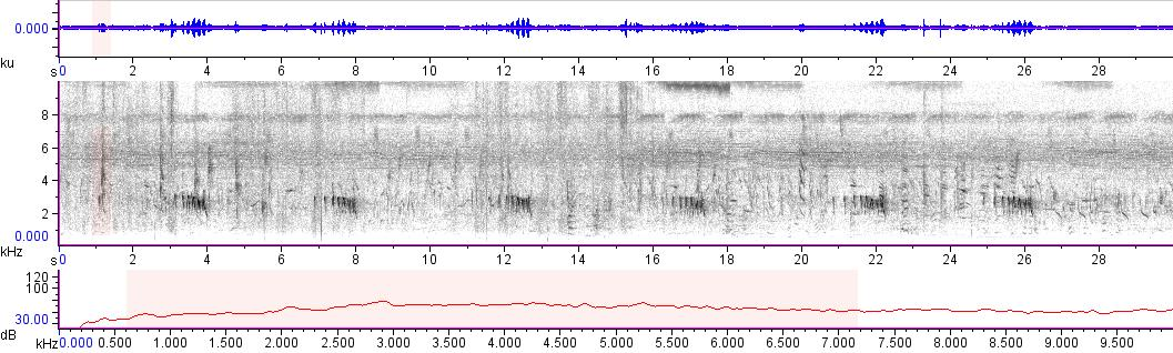 Sonogram of recording #AV 14019
