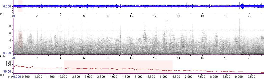 Sonogram of recording #AV 14036