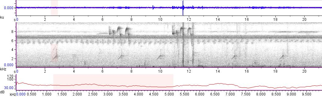 Sonogram of recording #AV 14059