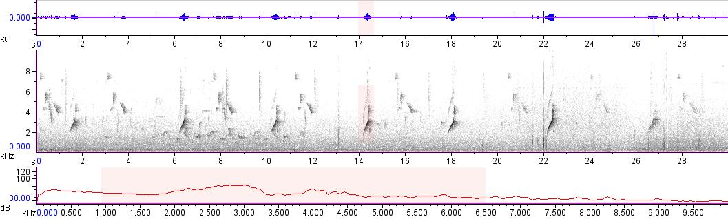 Sonogram of recording #AV 14070