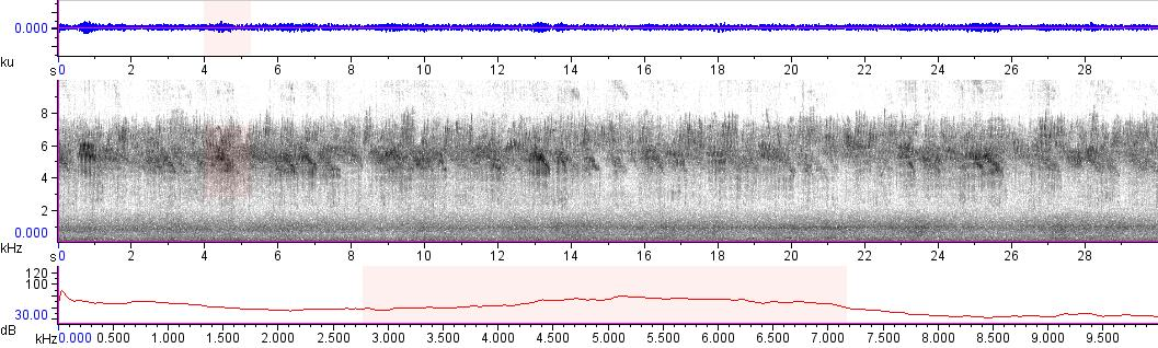 Sonogram of recording #AV 14092