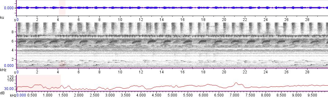 Sonogram of recording #AV 14103