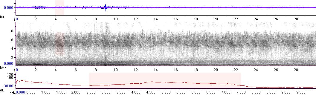 Sonogram of recording #AV 14109