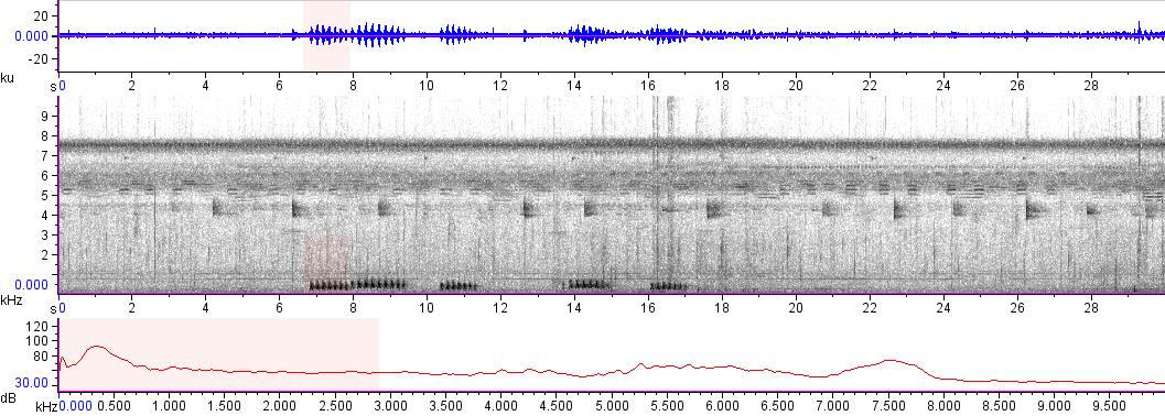 Sonogram of recording #AV 14136