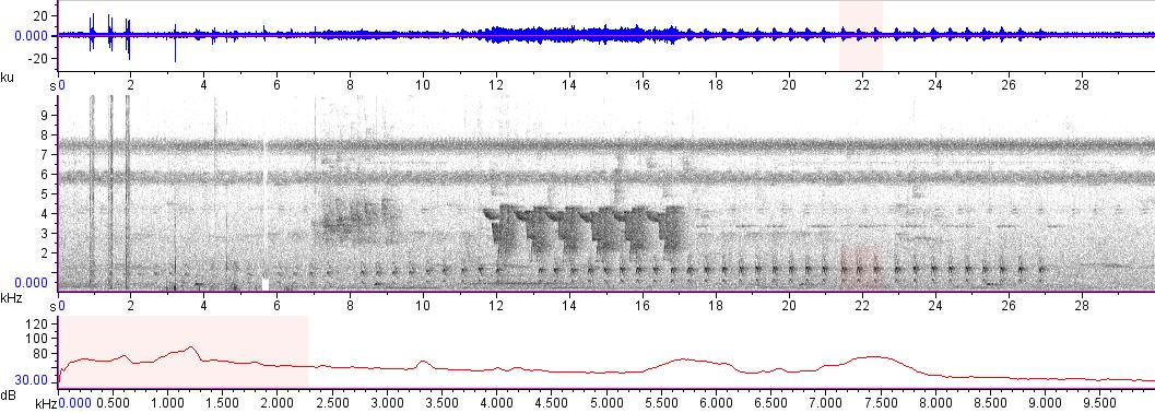 Sonogram of recording #AV 14139