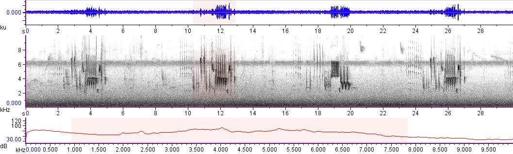 Sonogram of recording #AV 14164