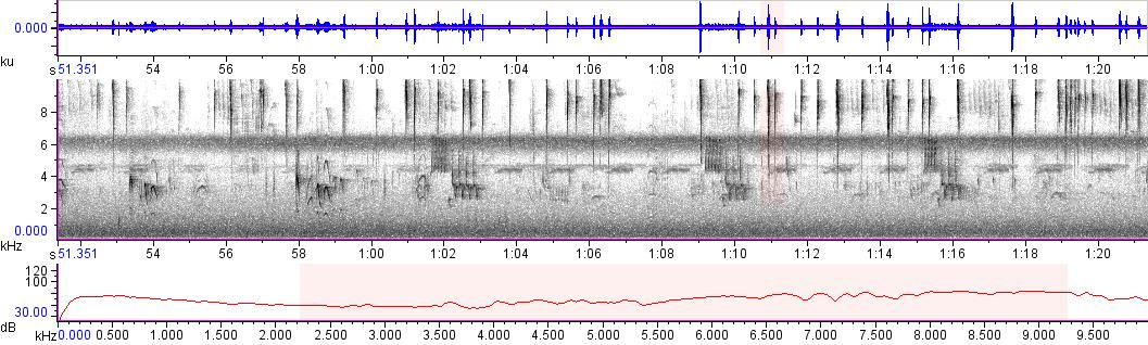 Sonogram of recording #AV 14167