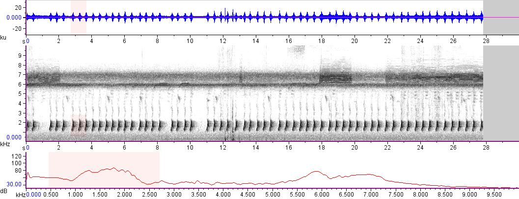 Sonogram of recording #AV 14256