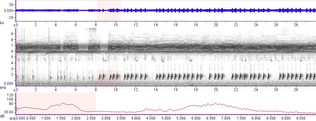 Sonogram of recording #AV 14257