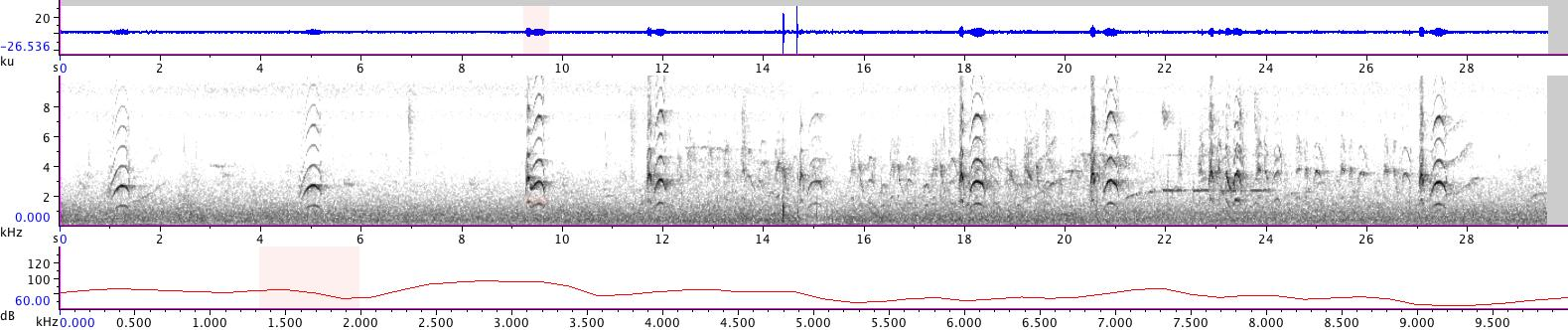 Sonogram of recording #AV 14274