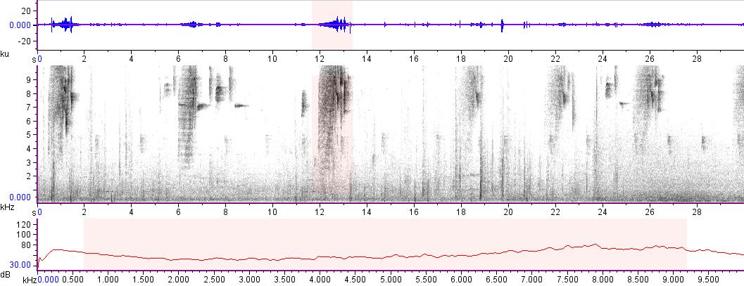 Sonogram of recording #AV 14294