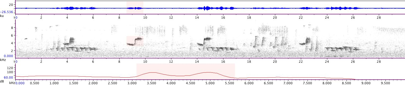 Sonogram of recording #AV 14348