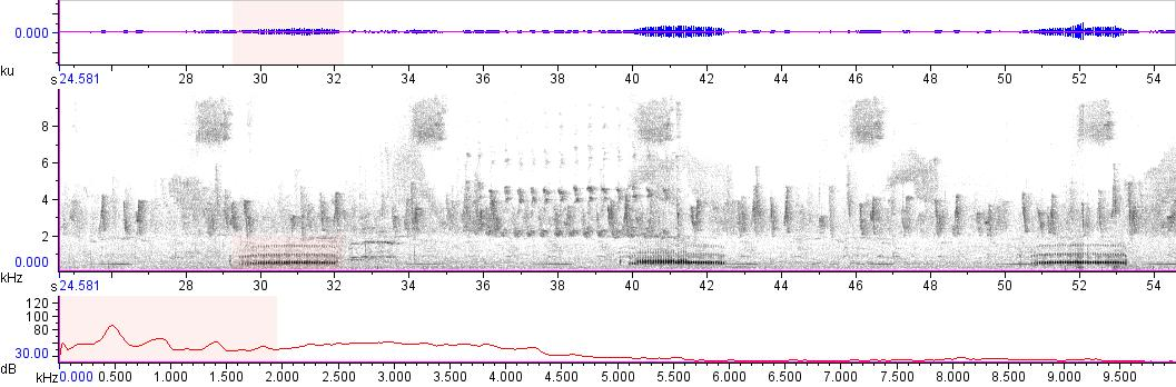 Sonogram of recording #AV 14382