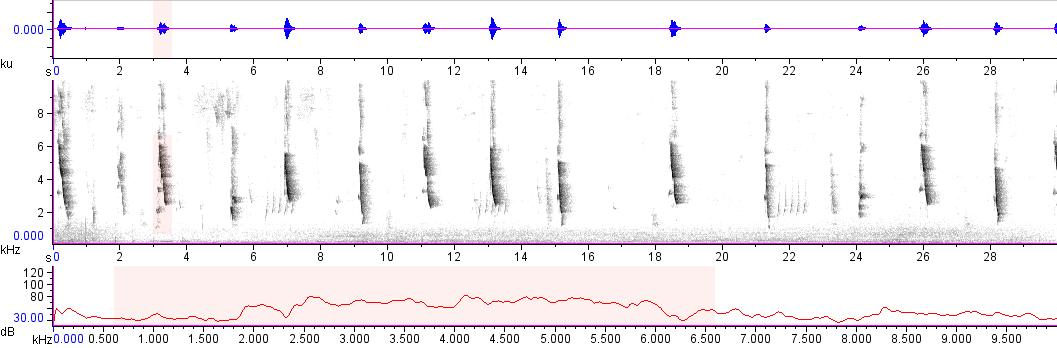 Sonogram of recording #AV 14388