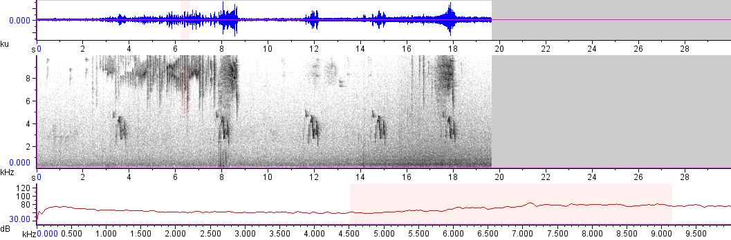 Sonogram of recording #AV 14391