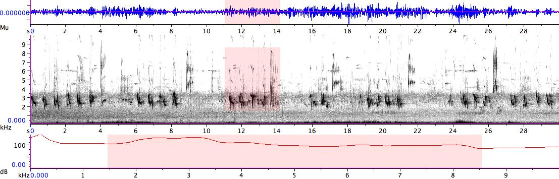 Sonogram of recording #AV 14428