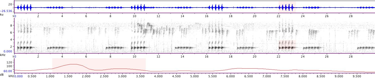 Sonogram of recording #AV 14453