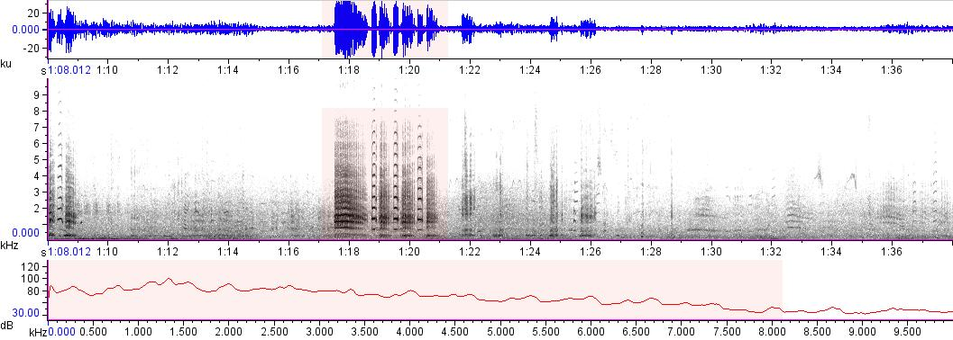 Sonogram of recording #AV 14481