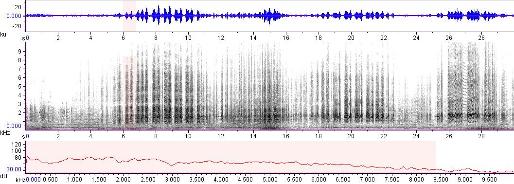 Sonogram of recording #AV 14483