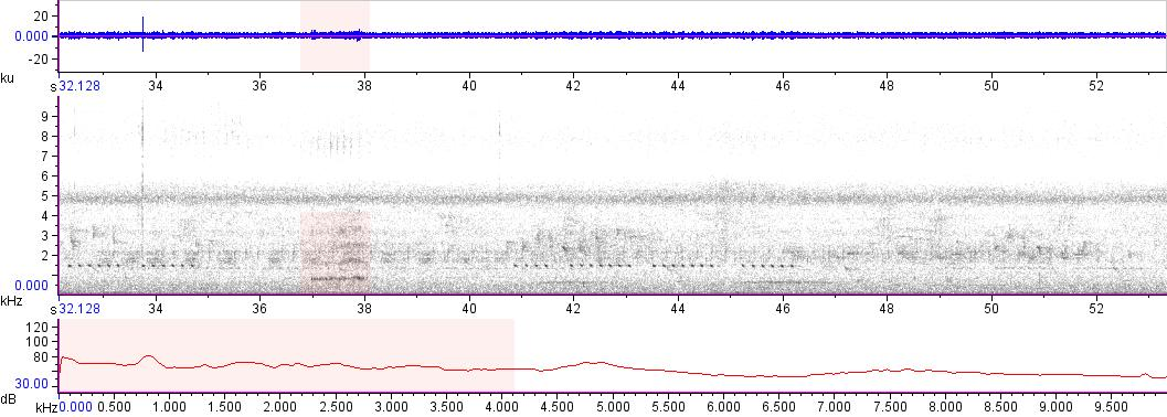 Sonogram of recording #AV 14502