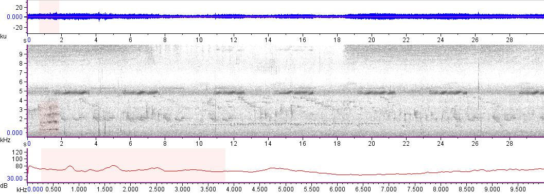 Sonogram of recording #AV 14503