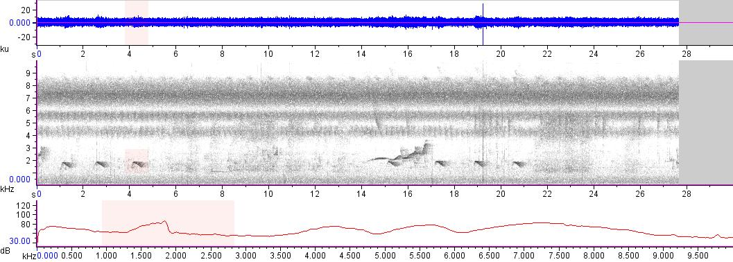 Sonogram of recording #AV 14515