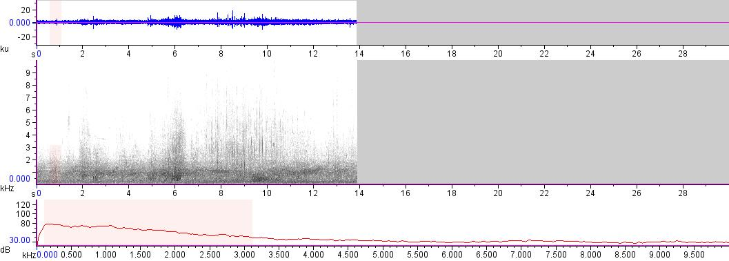 Sonogram of recording #AV 14537