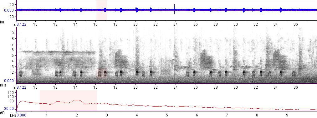 Sonogram of recording #AV 14601