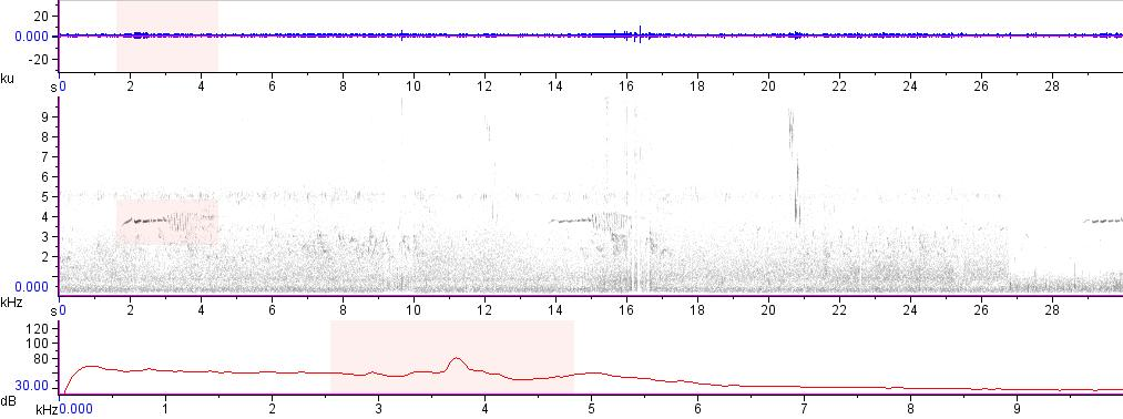 Sonogram of recording #AV 14637