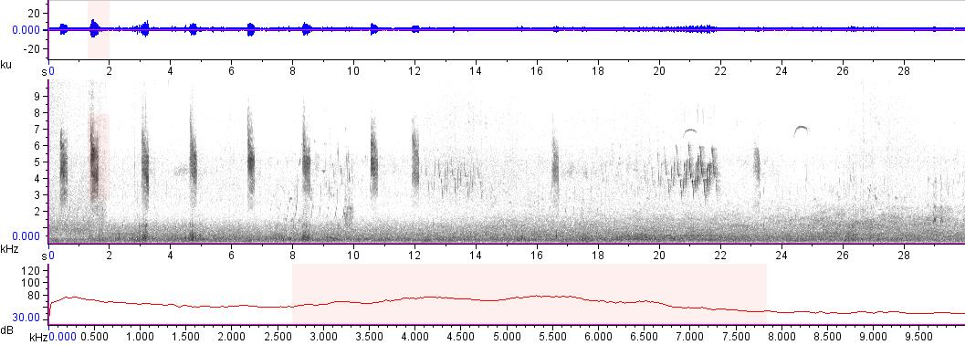 Sonogram of recording #AV 14642