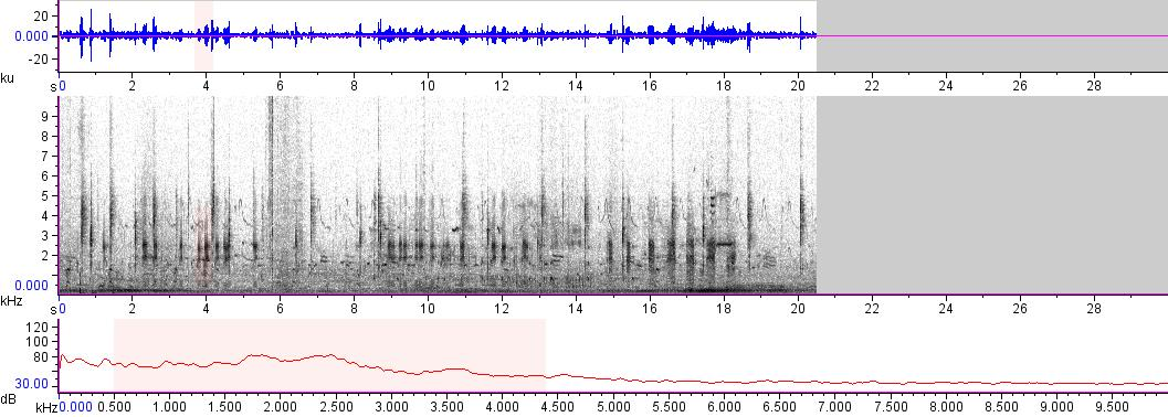 Sonogram of recording #AV 14651
