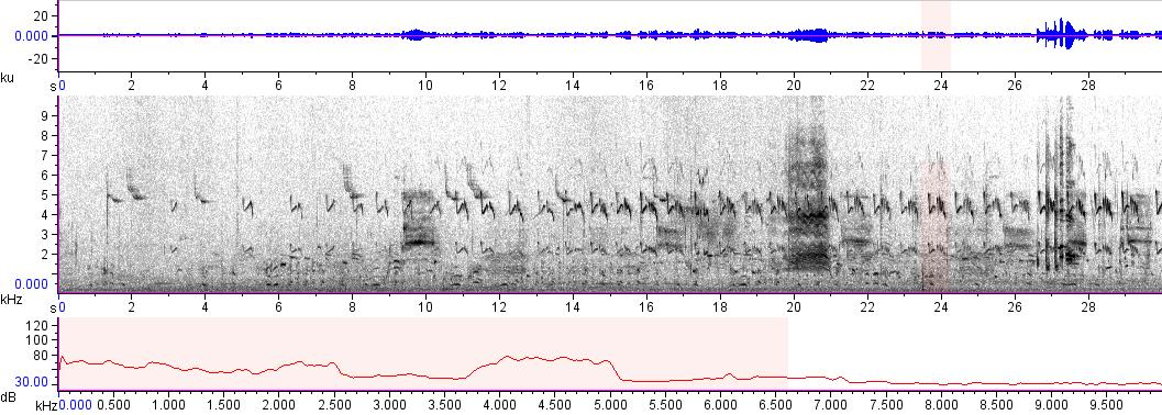 Sonogram of recording #AV 14655