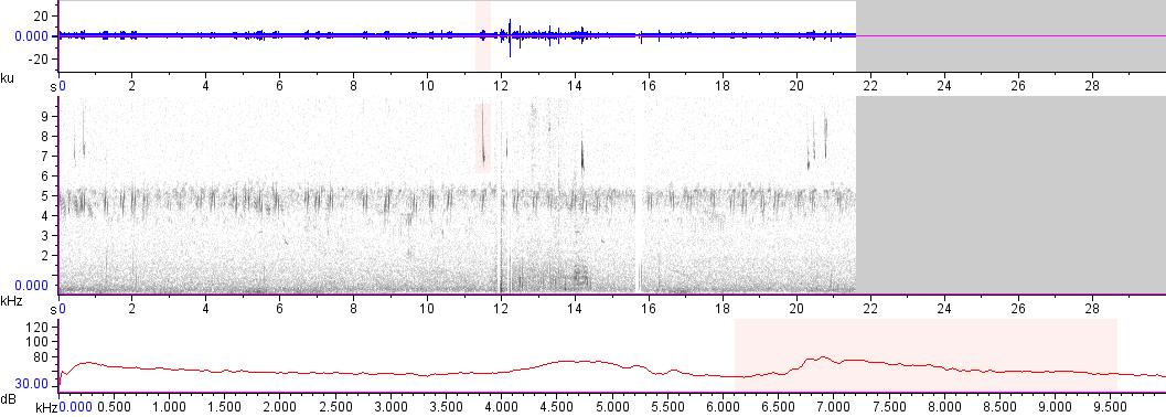 Sonogram of recording #AV 14778