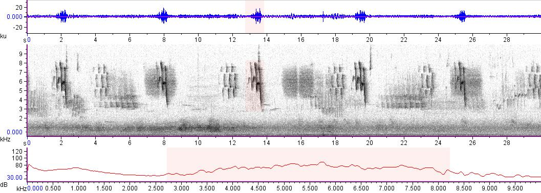 Sonogram of recording #AV 14823