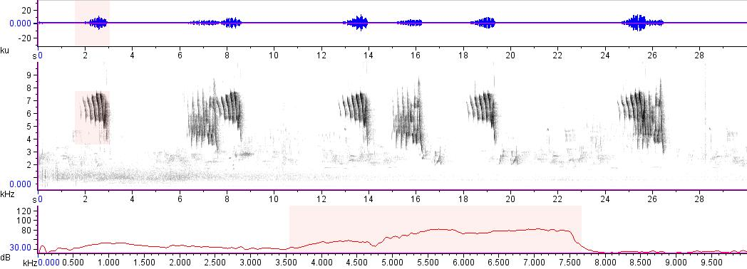 Sonogram of recording #AV 14859