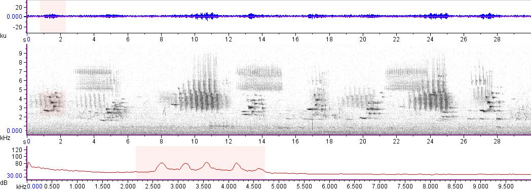 Sonogram of recording #AV 14864