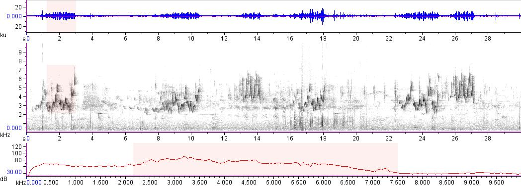 Sonogram of recording #AV 14871