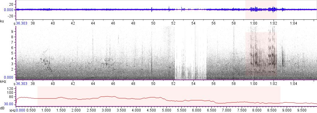 Sonogram of recording #AV 14890