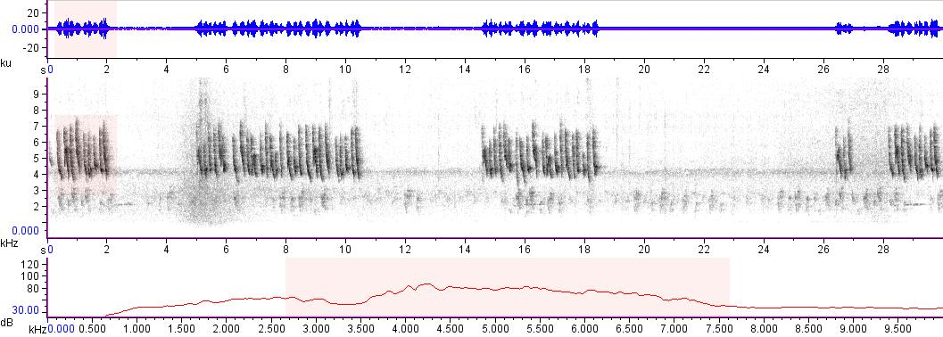 Sonogram of recording #AV 14911