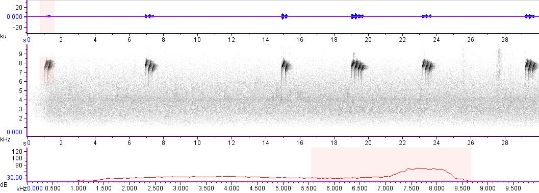 Sonogram of recording #AV 14934