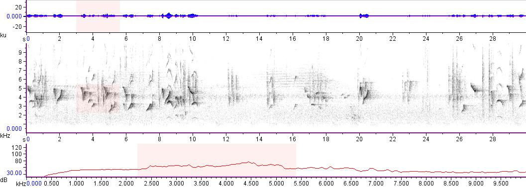 Sonogram of recording #AV 14940