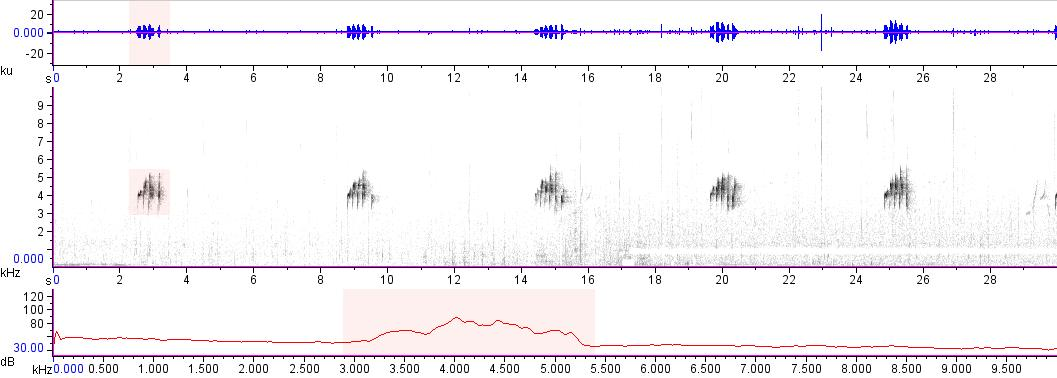 Sonogram of recording #AV 14943