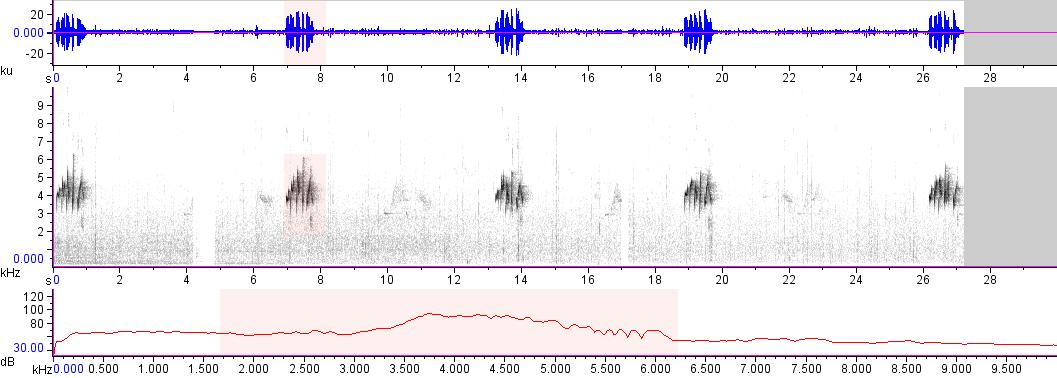 Sonogram of recording #AV 14946