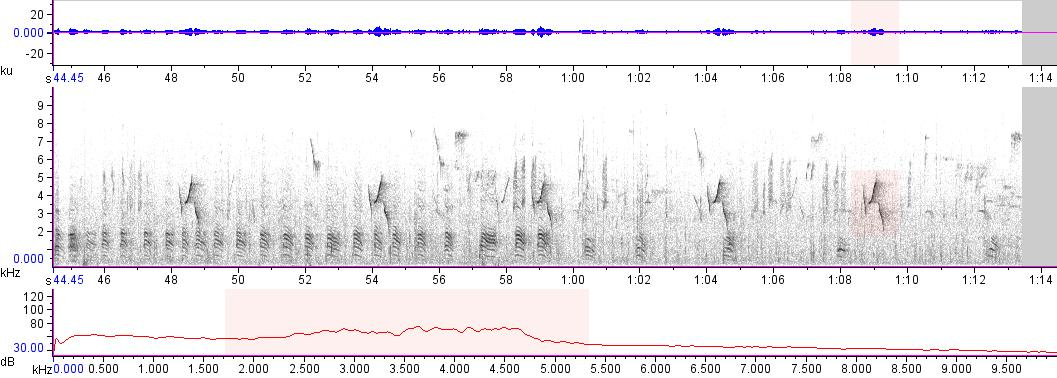Sonogram of recording #AV 14954