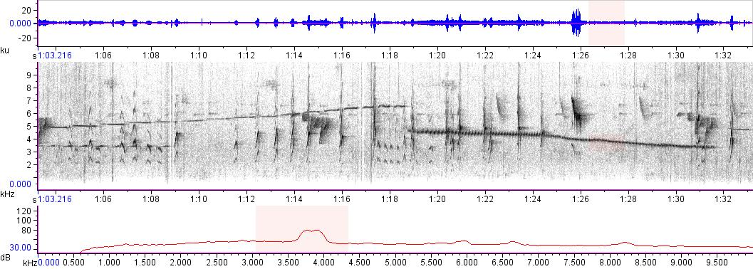 Sonogram of recording #AV 14961