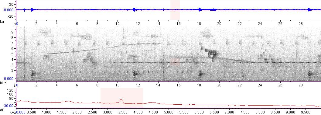 Sonogram of recording #AV 14966